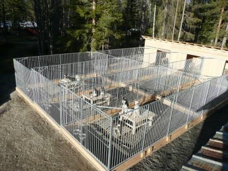 Rohrstabhundezwingeranlage für Huskys gebaut